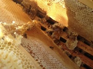 skk honey 8