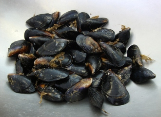 mussels_Ocean Foods International