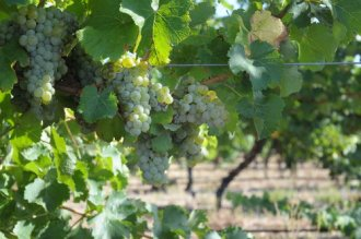 Trevelen Farm Wine