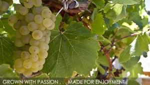 Gnornbup vines