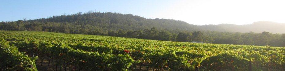 Mt Trio Wines