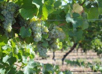 trevelen_farm_wine.jpg